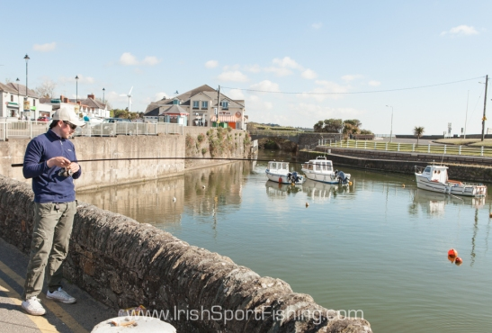 Harbour walls provide an ideal platform for fishing off. These mullet are used to being fed bread, crisps, chips and candy-floss from people passing by!